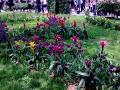 post-34711-039156900 1305031288_thumb.jpg