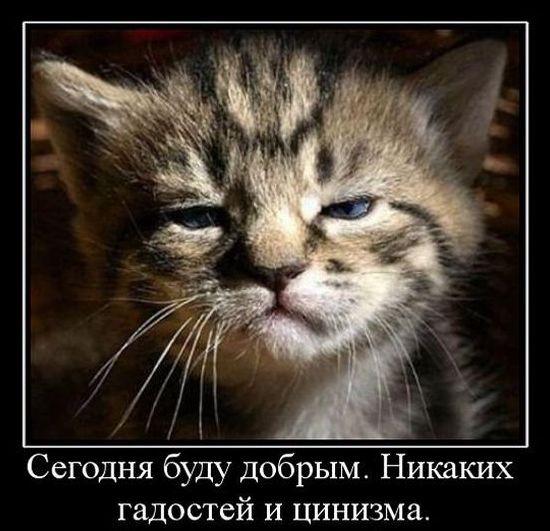 post-26432-0-05896100-1414653346.jpg
